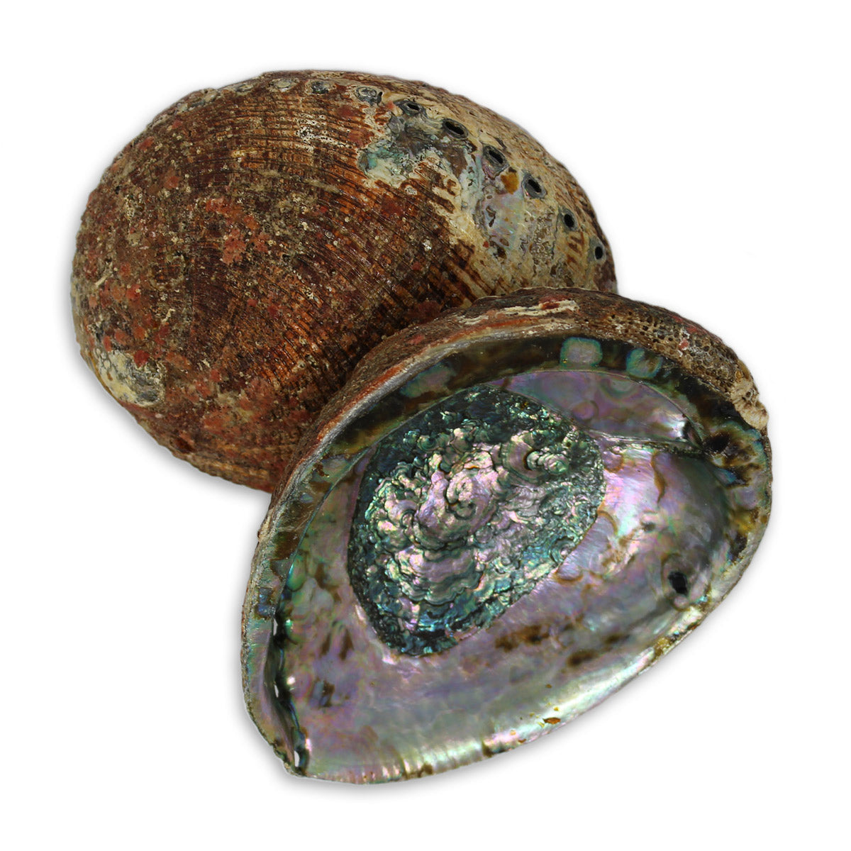 Abalone Shell Bowl for Clearing