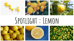 Spotlight : Lemon