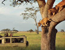 Ruaha National Park/ Mikumi National Park-Tanzania