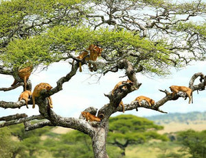 Tarangire National Park or Lake Manyara National Park-UAE