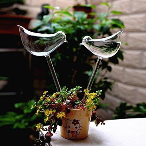 Self Watering Bird (Set of 2) - Ridaaz Home