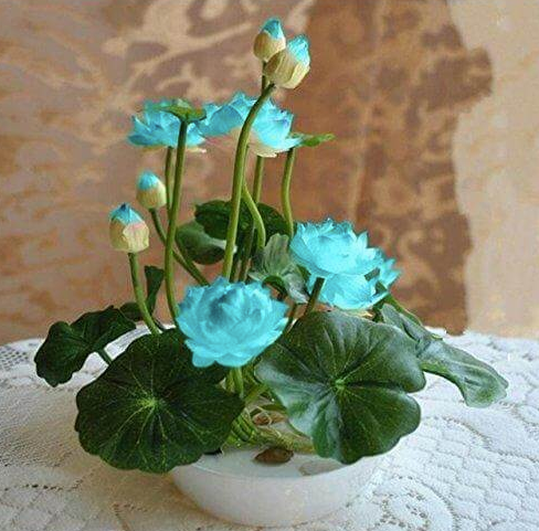 Water Flower Bonsai (Pack of 50)
