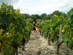 Marathon runners at a vineyard in Medoc, France