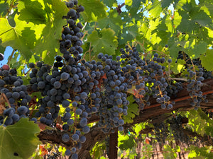 A Guide to Different Grape Varietals