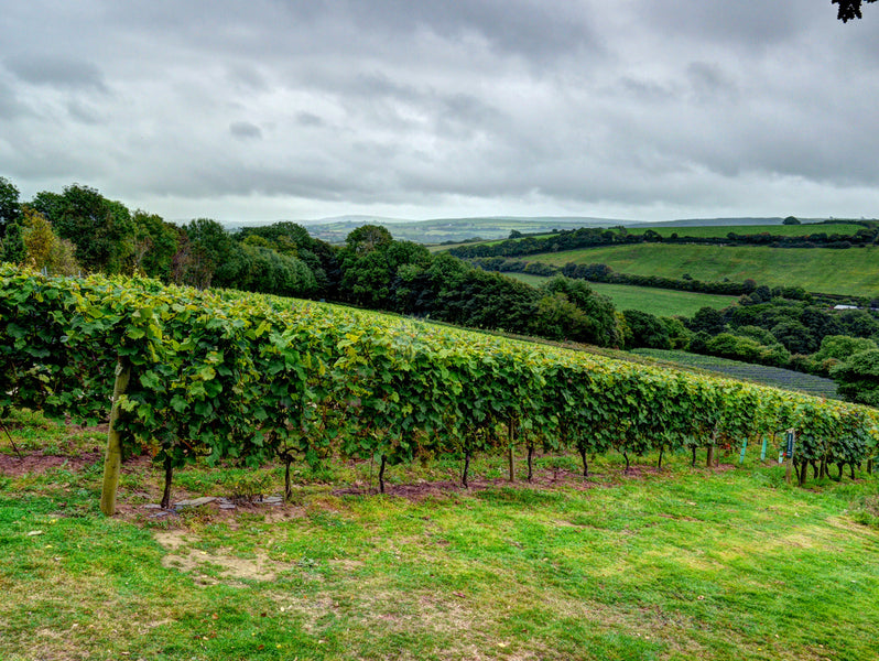 Vineyards to Visit in the South of England
