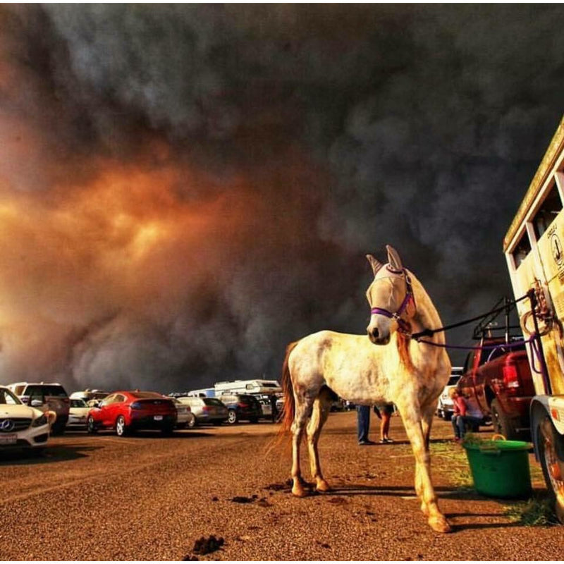 Donate to California Wildfire Relief