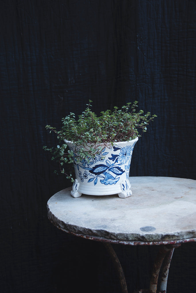 Raised blue and white plant pot. Interior plants and greenery.