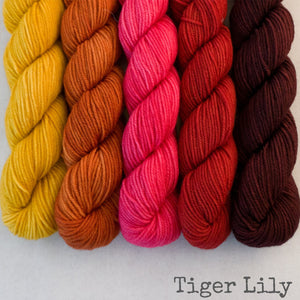 Simply Sock 5-Pack Mini Skeins in Tiger Lily Semi Solid