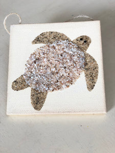 T1572 turtle tiny shell/sand