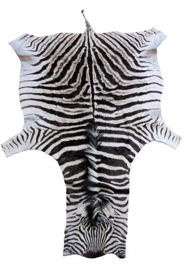 *Limited Supply!* Genuine African Zebra Hide! WHOLESALE-$900
