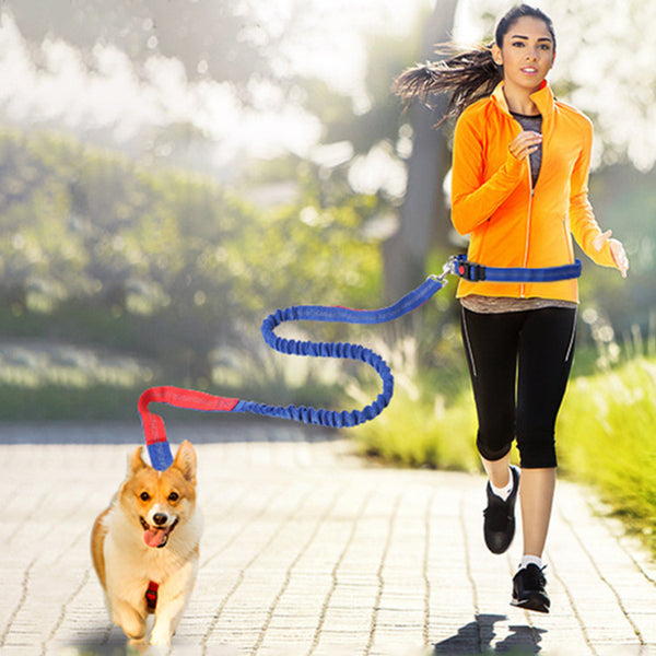 Hands Free Dog Leash for Running, Walking, Hiking