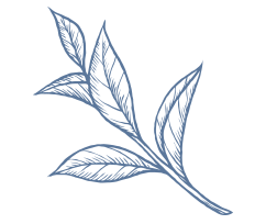 Grean Tea Leaf Extract Illustration