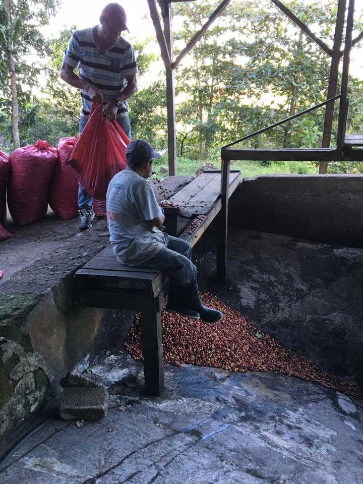 Decaf Cafe Diego Nicaragua by Hemisphere Coffee Roasters from Ohio
