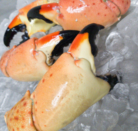 Florida Stone Crab | Colossal Claws