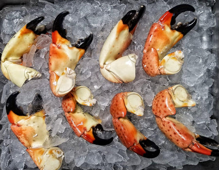 Florida Stone Crab | Jumbo Claws