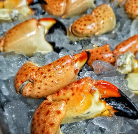 Florida Stone Crab | Large Claws