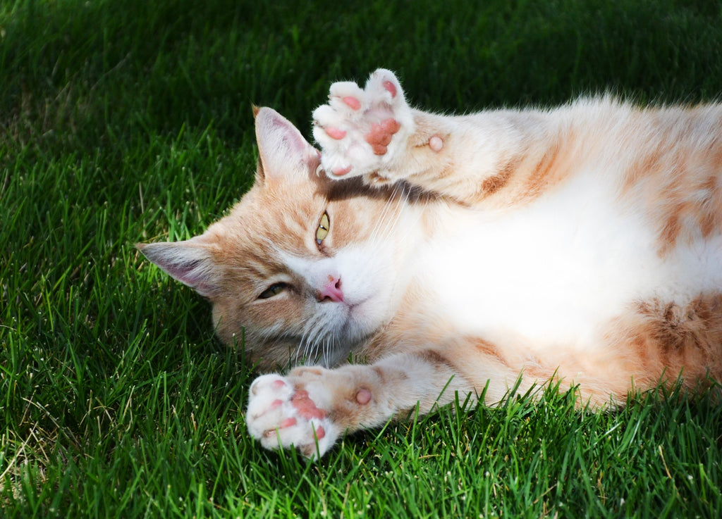 Solutions for Cats Destructive Scratching