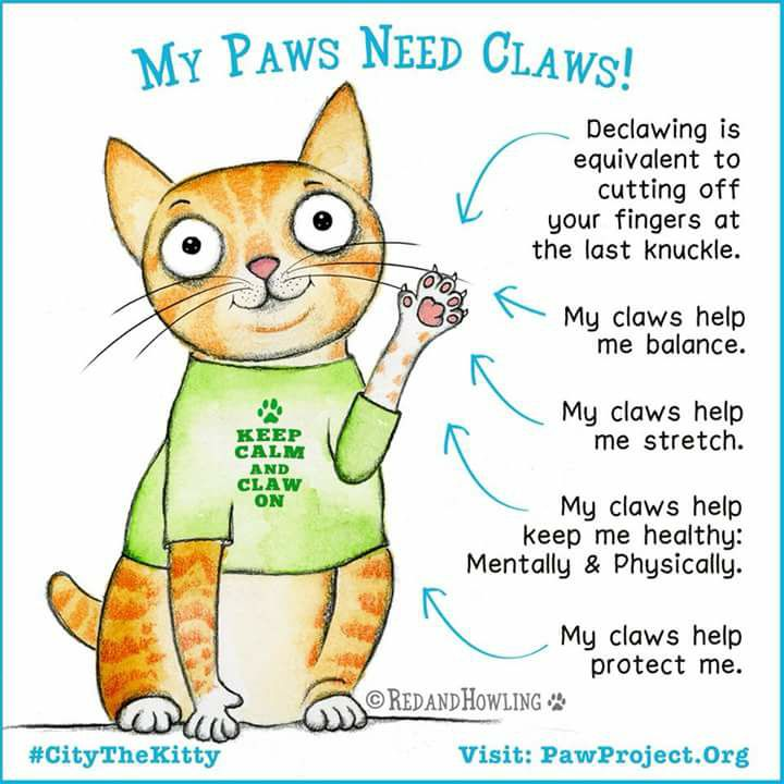 Declawing - The Unbiased Truth