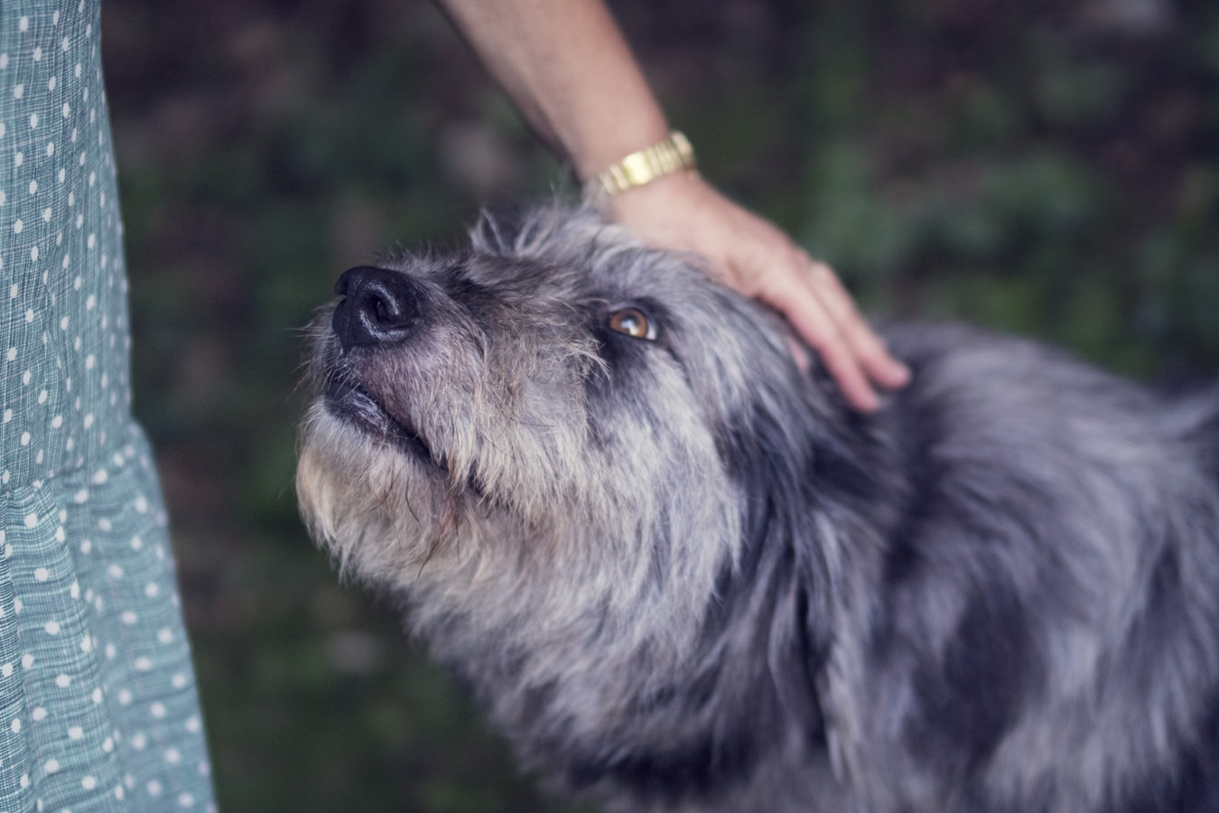 How to Pet a Dog, Build Trust Between You and Your Dog