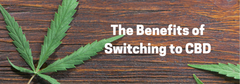 The Benefits of Switching to CBD