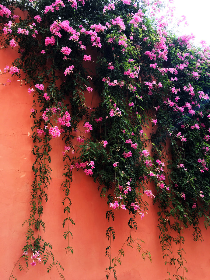 Marrakesh Flowers - Travel Photography