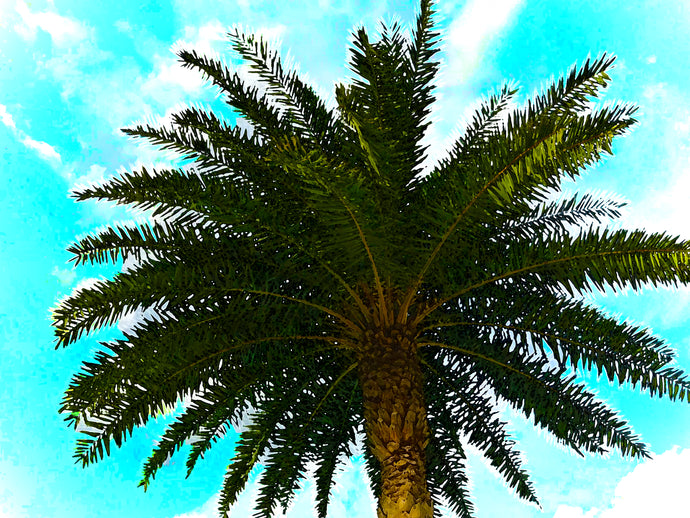 Mediterranean Palm Tree