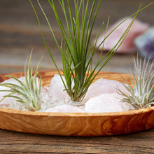 Rose Quartz Crystal Serenity Zen Garden with authentic raw rose quartz, clear crystal quartz chips and living air plants nestled in an olive wood display