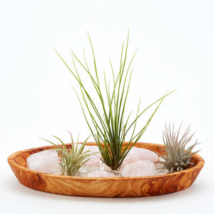 Rose Quartz Crystal Serenity Zen Garden with natural rose quartz, clear crystal quartz, air plants in an olive wood base.