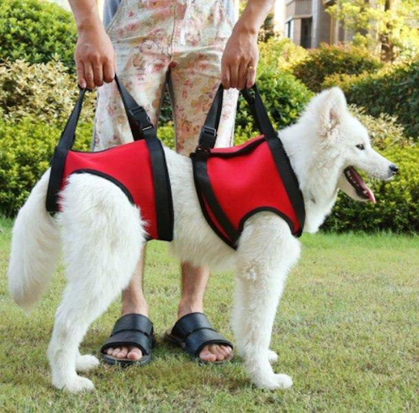Front and/or Rear Dog Lift Harness With Handle-DogsTailCircle