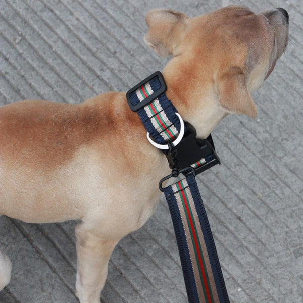 High Quality Reflective Easy On Dog Collar And Leash-DogsTailCircle