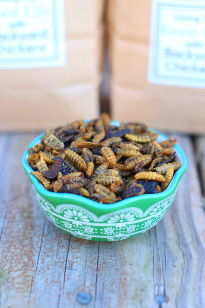 dried black soldier fly larvae in a bowl