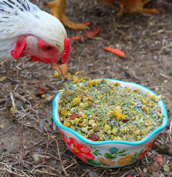 chickens looking at Scent of Spring Nesting Herbs For Backyard Chickens