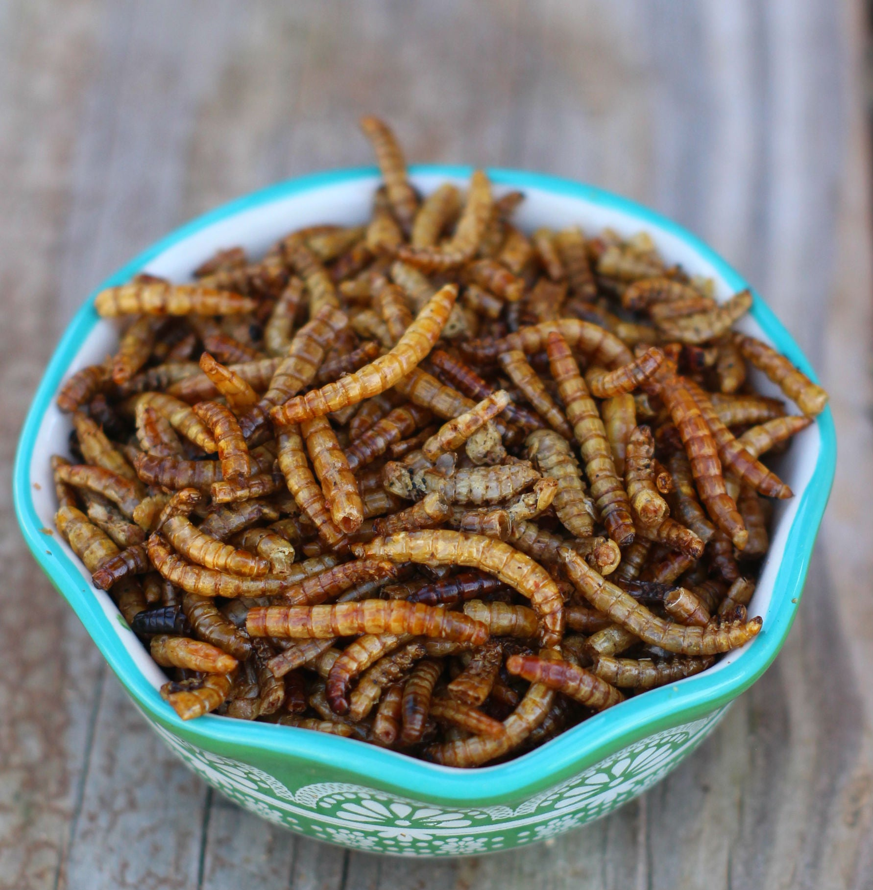 Mealworms -- LoveBugs For Hens (TM)