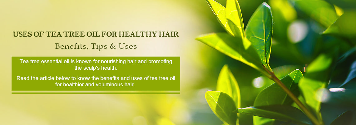 Tea Tree Oil Uses and Benefits for Healthy Hair