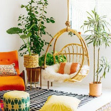Use Plants to Update Your Home