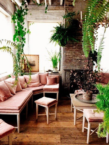 Plants used for home decor trends 2021