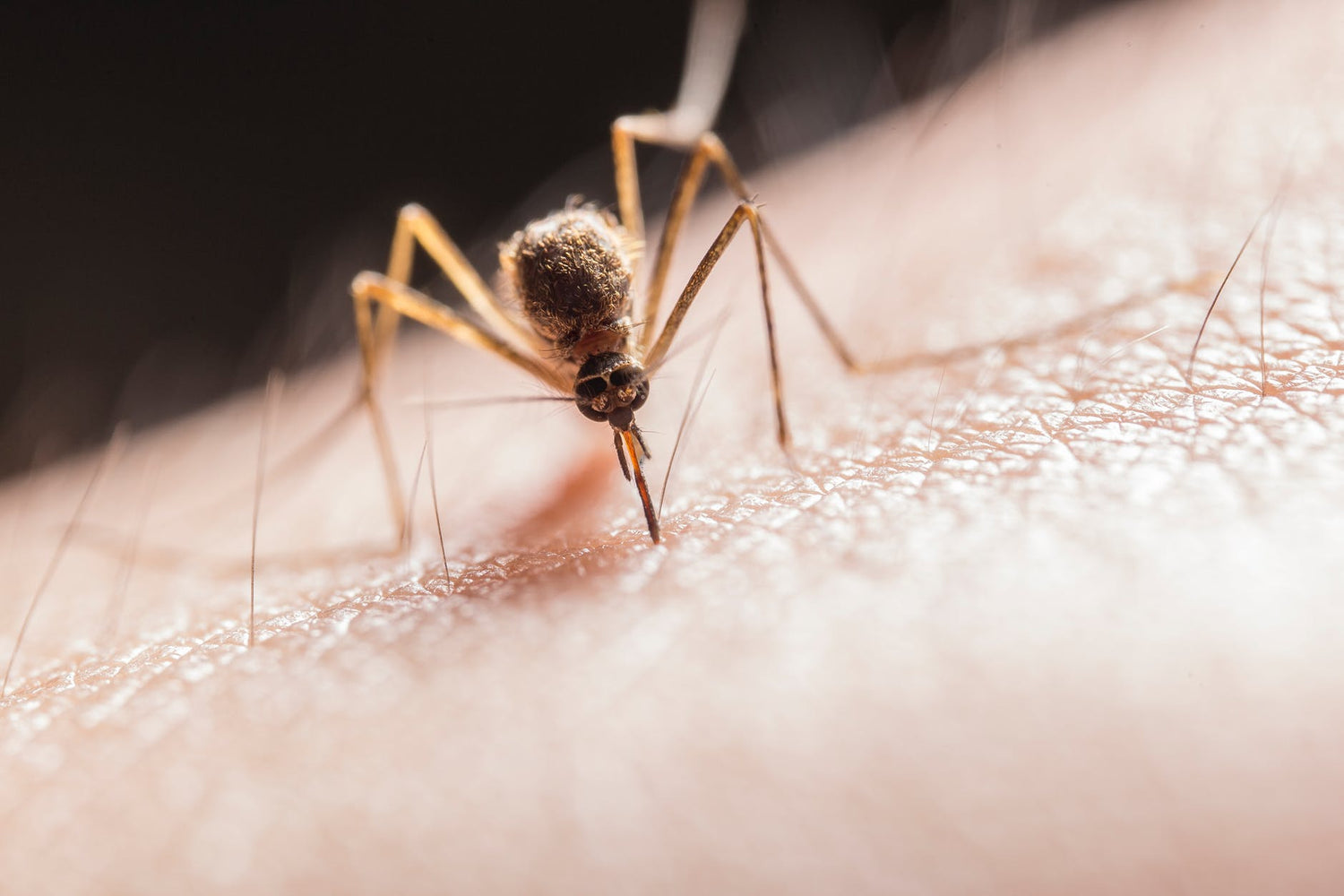Insect Repellent: A Key Defence In The War Against Mosquitoes