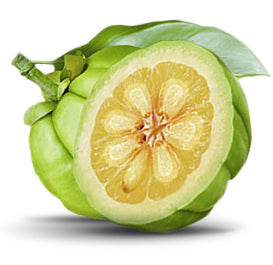 Garcinia Cambogia: The 'Holy Grail' of Weight Loss