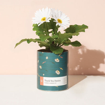 Daisies Waxed Planter Grow Kit