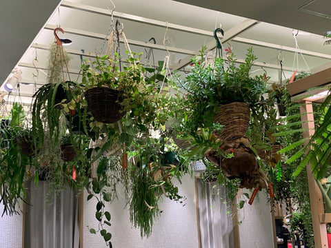 Green hanging baskets as featured on Talking Tables Blog