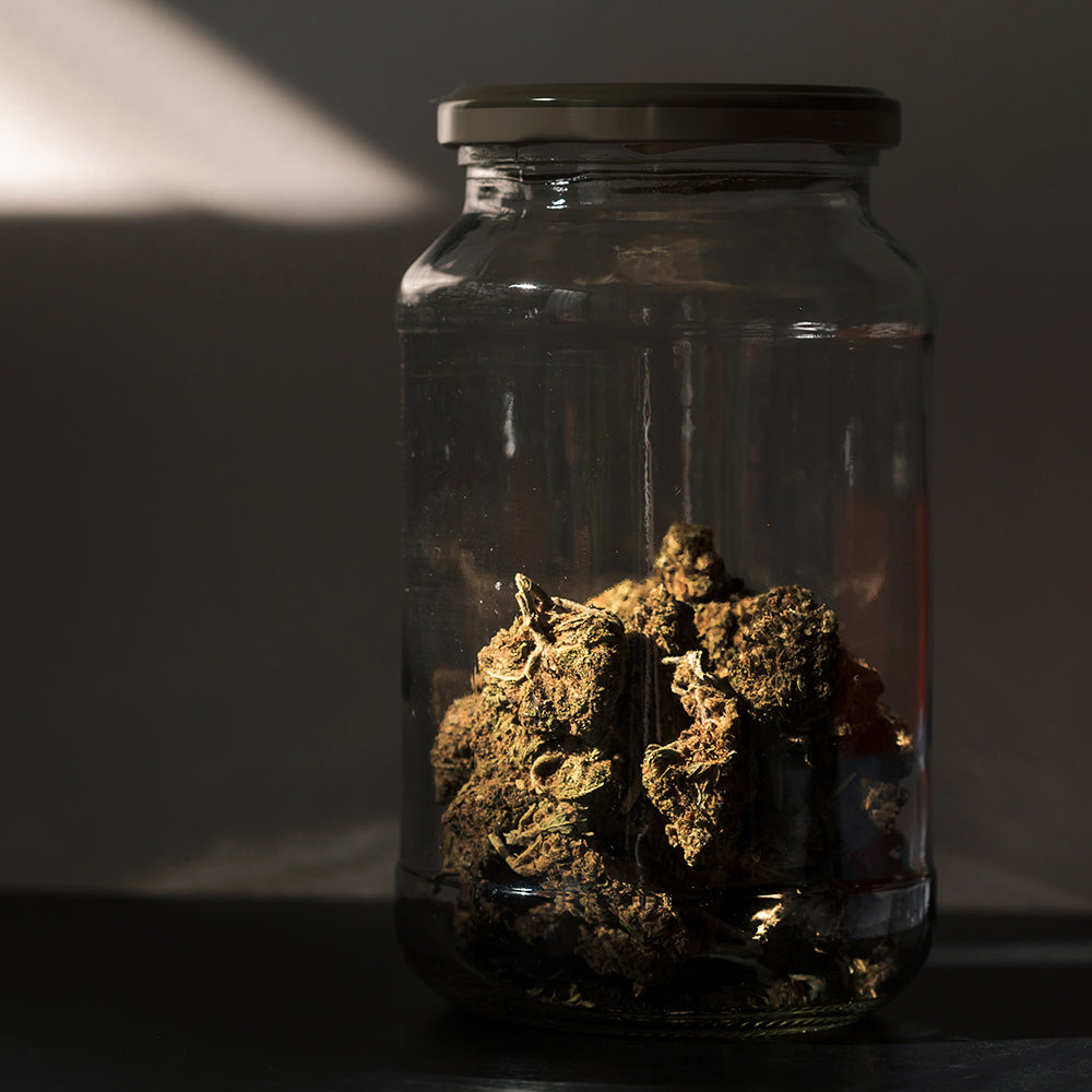 Image of a large jar filled with big dried cannabis flowers