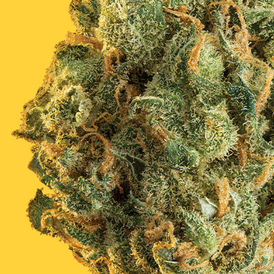 Image Featured Flower: Sour Diesel