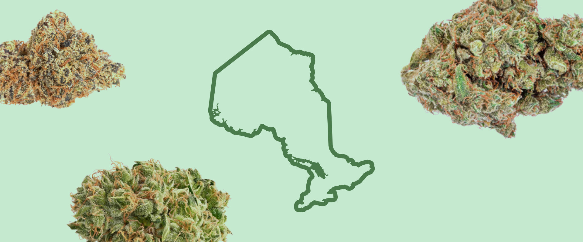 Ontario-Grown Cannabis