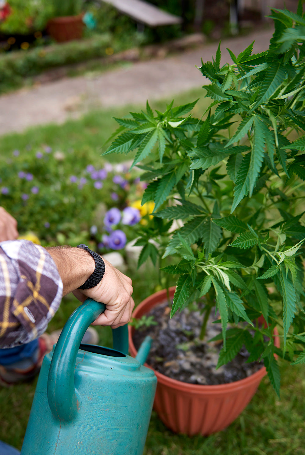 How to Grow Cannabis Outdoors | Ontario Cannabis Store