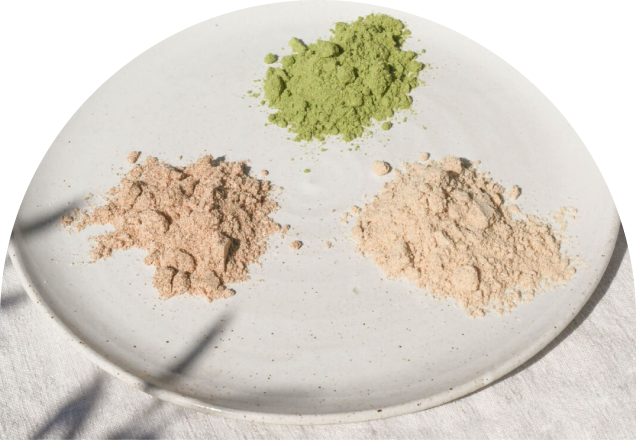 What the Heck are Adaptogens Anyway?