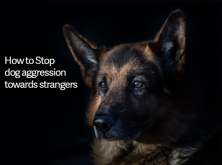 How to Stop Dog Aggression towards Strangers