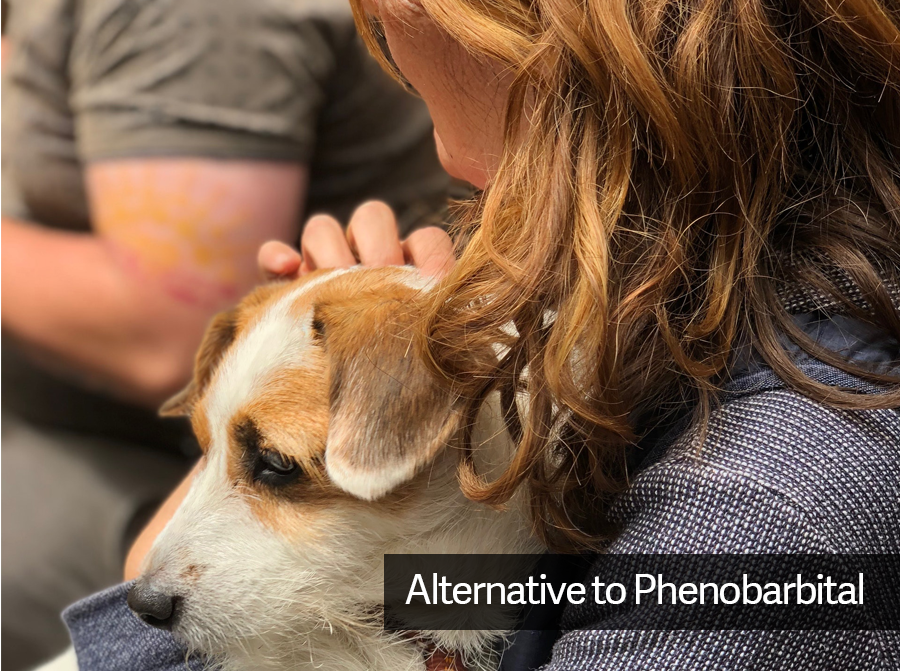 Is CBD Oil a Natural and Safe Alternative to Phenobarbital for Dogs