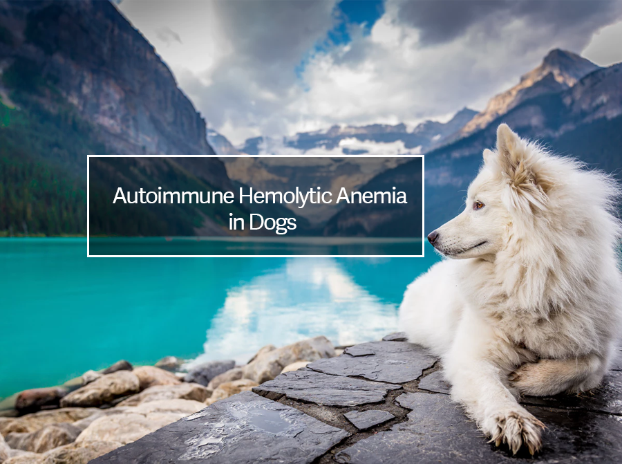 Autoimmune Hemolytic Anemia in Dogs | Causes and Natural Treatment