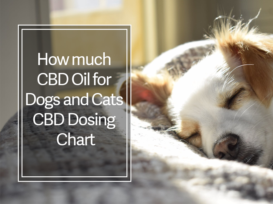 How Much CBD Oil for Dogs and Cats: Serving Size vs CBD Dosing Chart