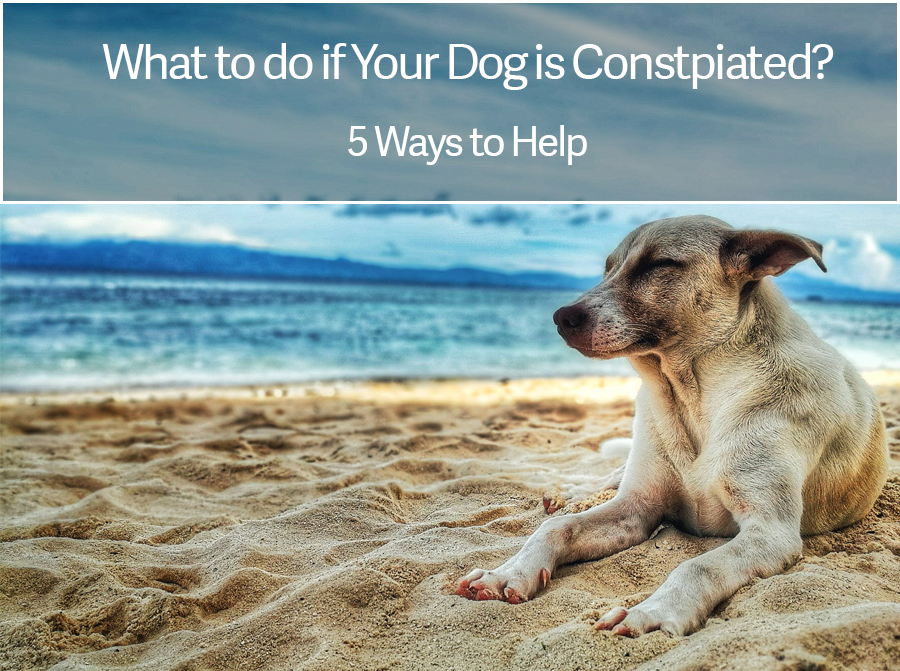 What to do if Your Dog is Constipated? 5 Tips to Help Dog Constipation